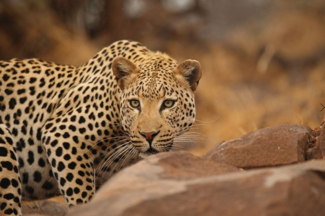 days kruger explorer tour south africa Tour Packages - Book honeymoon ,family,adventure tour packages to  days kruger explorer tour south africa |Travel Knits