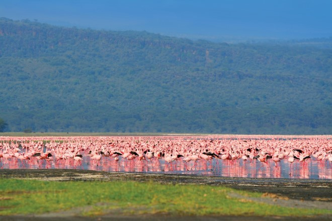 days kenya classic safari Tour Packages - Book honeymoon ,family,adventure tour packages to  days kenya classic safari |Travel Knits